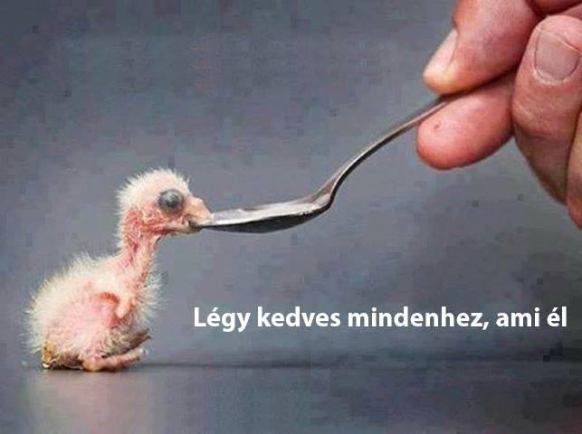 légy kedves